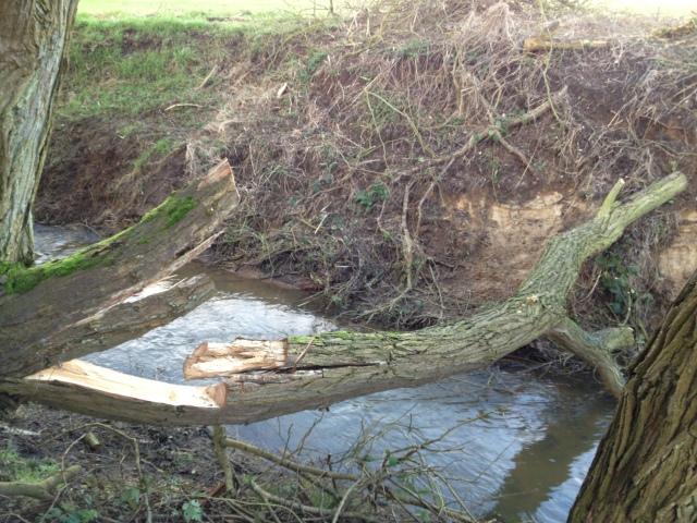 choppingwood1