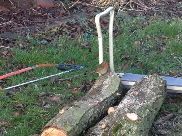 choppingwood3