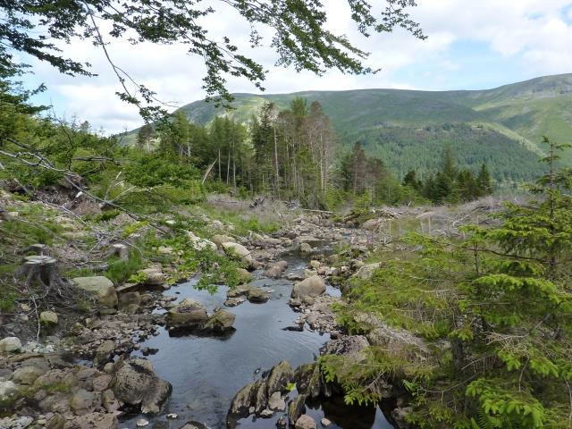Lake District june 2104 037