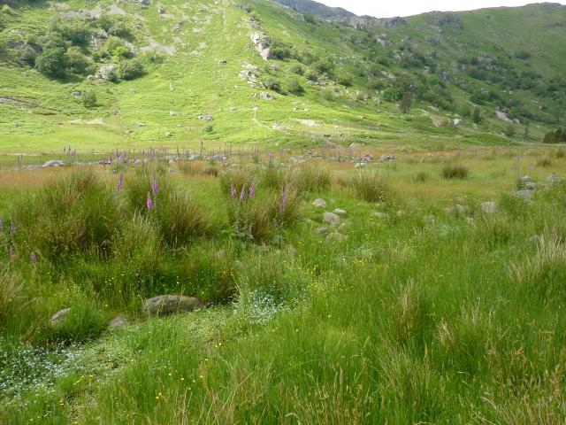 Lake District june 2104 102